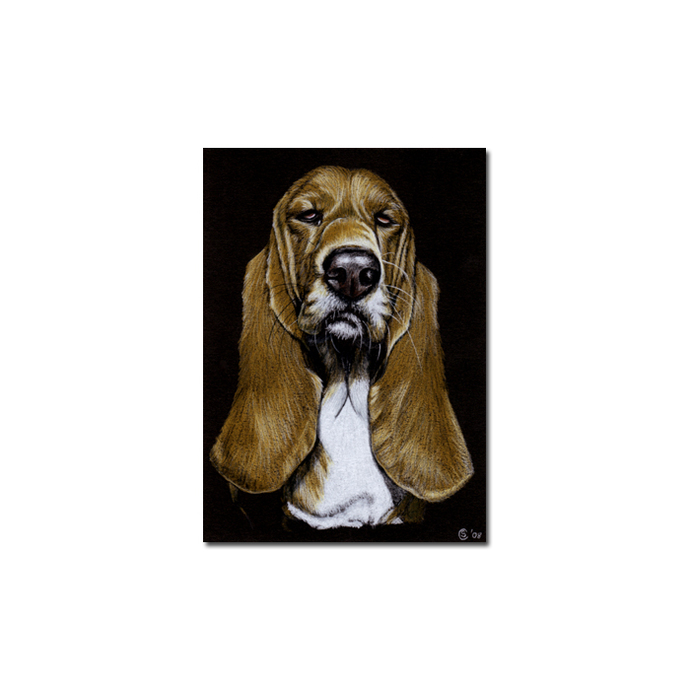 BASSET HOUND dog puppy pet pencil painting Sandrine Curtiss Art Limited Edition