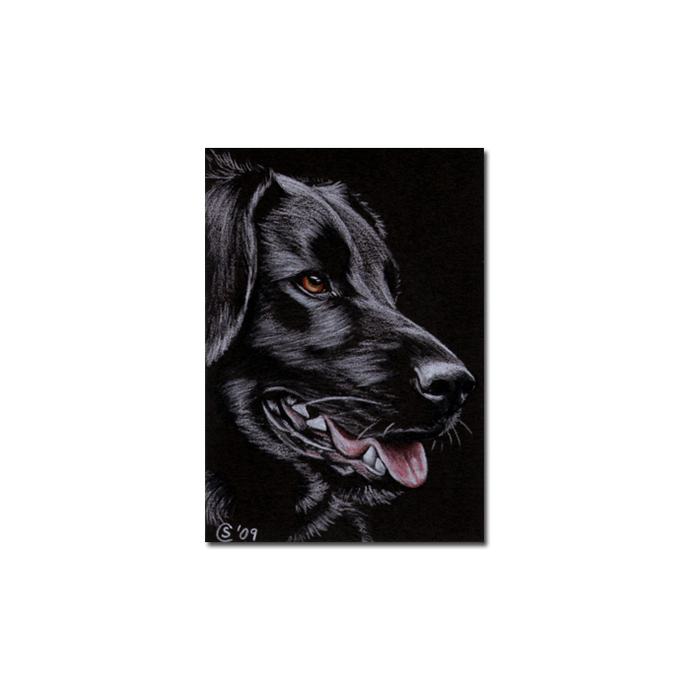 BLACK LABRADOR 22 dog puppy pet pencil painting Sandrine Curtiss Art Limited