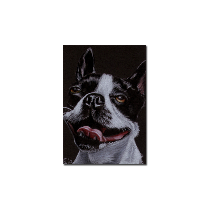 BOSTON TERRIER 4 dog puppy pet pencil painting Sandrine Curtiss Art Limited