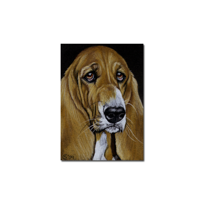 BASSET HOUND 2 dog puppy pet pencil painting Sandrine Curtiss Art Limited