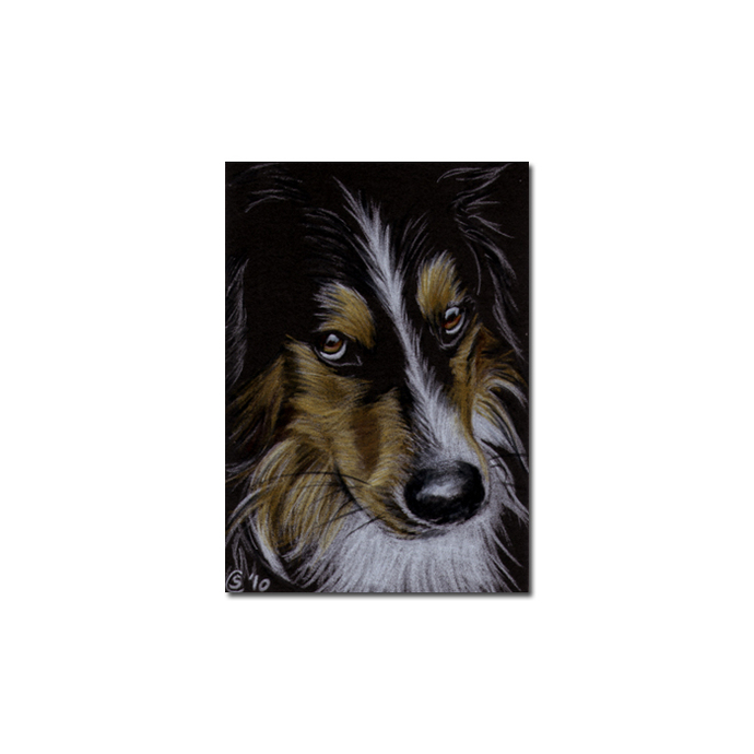 COLLIE 2 dog puppy pet pencil painting Sandrine Curtiss Art Limited Edition