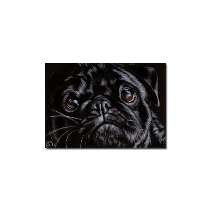 PUG 9 dog puppy pet pencil painting Sandrine Curtiss Art Limited Edition PRINT