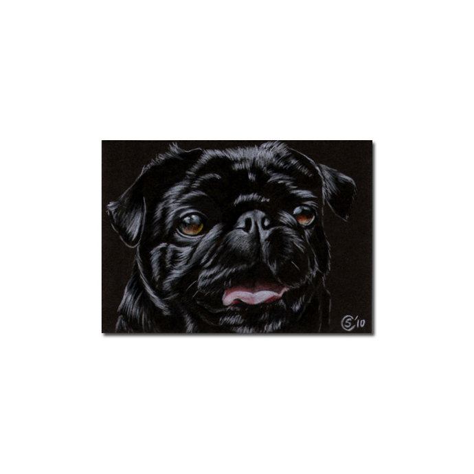 PUG 6 dog puppy pet pencil painting Sandrine Curtiss Art Limited Edition PRINT