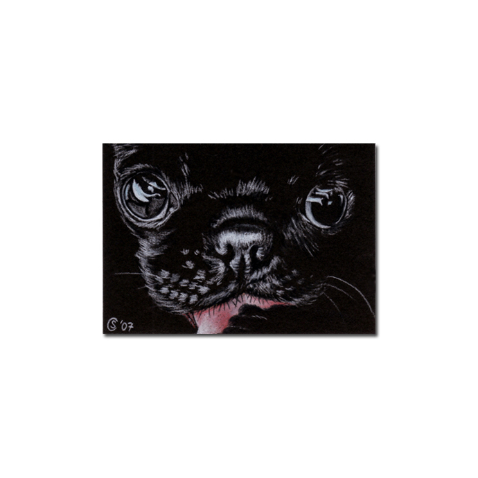 PUG 4 dog puppy pet pencil painting Sandrine Curtiss Art Limited Edition PRINT