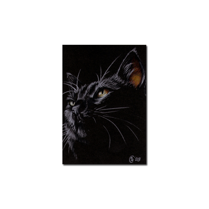 Black CAT 121 kitten Halloween chat noir drawing painting Sandrine Curtiss Art