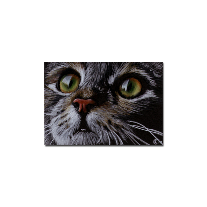 Tabby 63 CAT grey tiger kitty kitten drawing painting Sandrine Curtiss Art