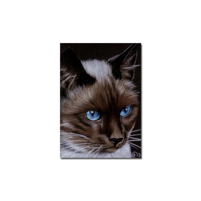 SIAMESE 5 CAT portrait kitty kitten drawing painting Sandrine Curtiss Art