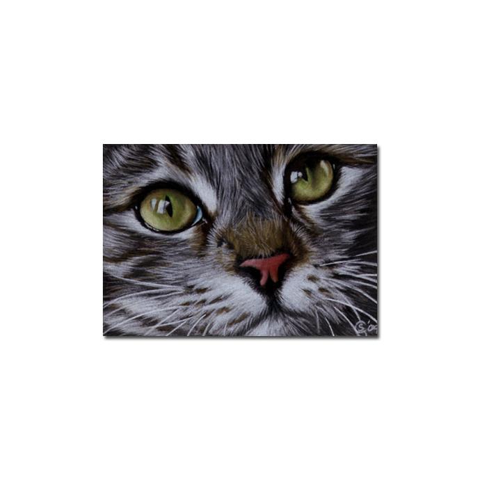 Tabby 53 CAT grey ginger orange tiger kitty kitten drawing painting Sandrine
