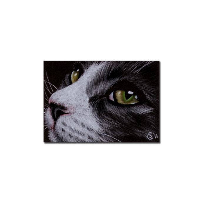 Tabby CAT 91 grey tiger kitty kitten drawing painting Sandrine Curtiss Art