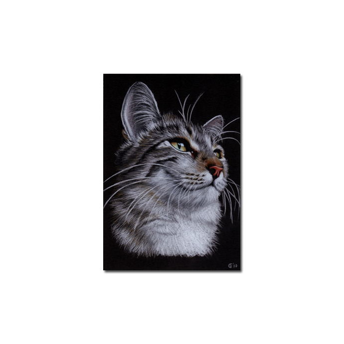 Tabby 71 CAT grey tiger kitty kitten drawing painting Sandrine Curtiss Art