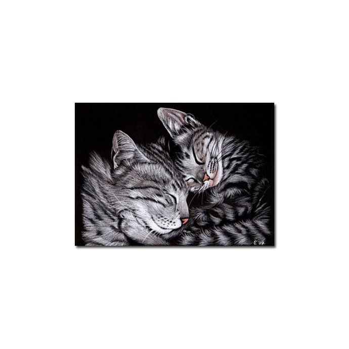 KITTENS 2 tabby cat grey tiger kitty kitten drawing painting Sandrine Curtiss