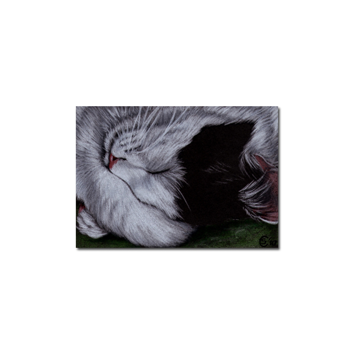 TUXEDO Holly 37 CAT kitten Black Halloween drawing painting Sandrine Curtiss Art
