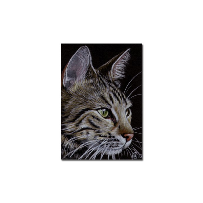 Tabby 72 CAT grey tiger kitty kitten drawing painting Sandrine Curtiss Art