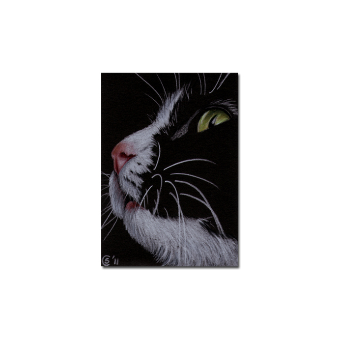 TUXEDO 10 CAT kitten Black Halloween drawing painting Sandrine Curtiss Art