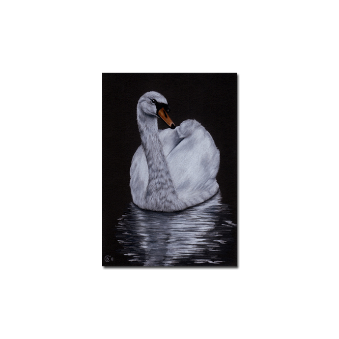 SWAN 2 portrait bird duck chick pencil painting Sandrine Curtiss Art Limited