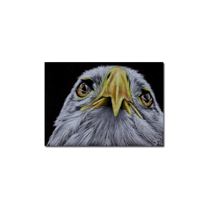 EAGLE 3 raptor bird pencil painting Sandrine Curtiss Art Limited Edition Print