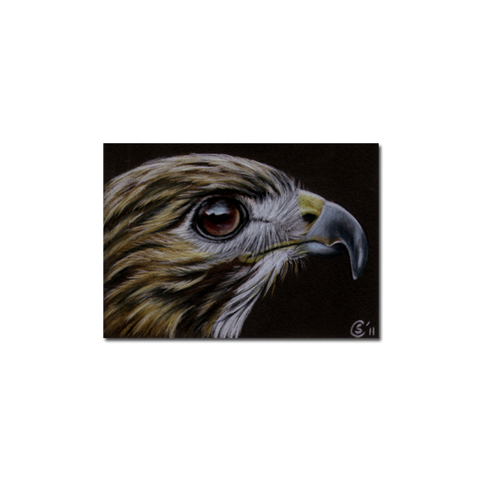 HAWK 2 raptor bird pencil painting Sandrine Curtiss Art Limited Edition Print