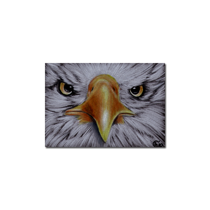 EAGLE 2 raptor bird pencil painting Sandrine Curtiss Art Limited Edition Print