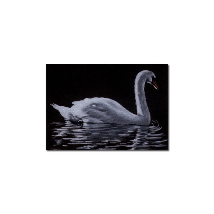 SWAN bird duck chick pencil painting Sandrine Curtiss Art Limited Edition Print