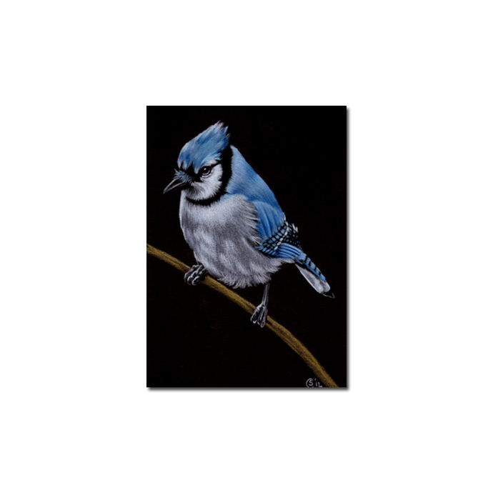 BLUE JAY 2 bird chick egg pencil painting Sandrine Curtiss Art Limited Edition
