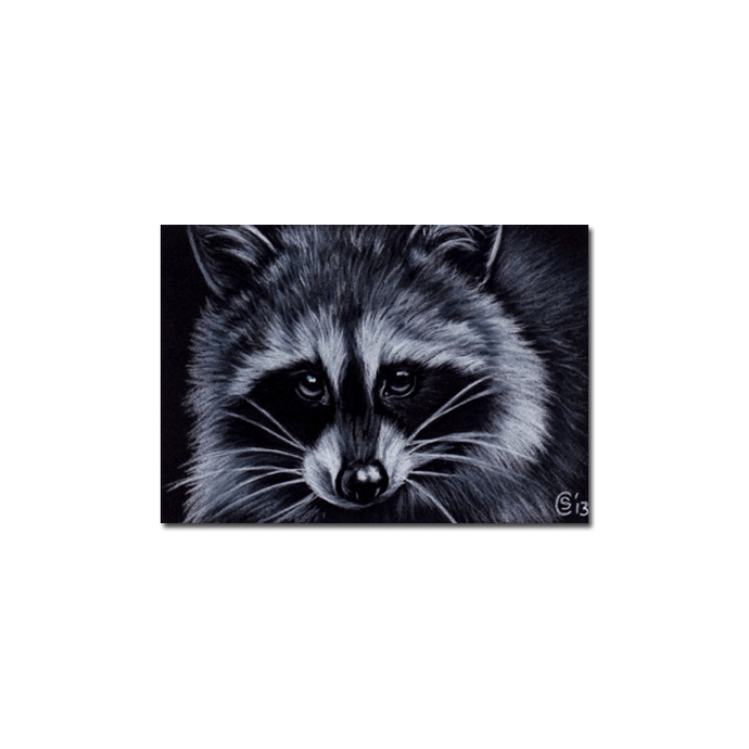 RACCOON 15 portrait woodland critter pencil painting Sandrine Curtiss Art