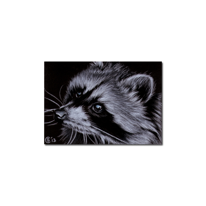 RACCOON 13 portrait woodland critter pencil painting Sandrine Curtiss Art