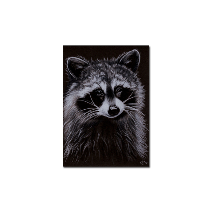 RACCOON 10 portrait woodland critter pencil painting Sandrine Curtiss Art