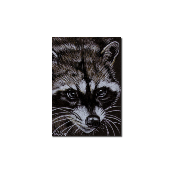 RACCOON 9 portrait woodland critter pencil painting Sandrine Curtiss Art Limited