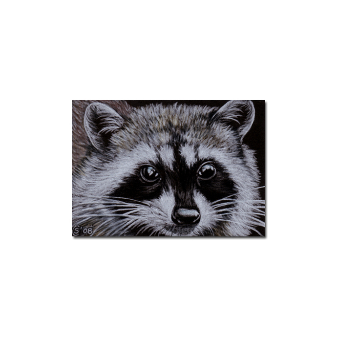 RACCOON 4 woodland critter pencil painting Sandrine Curtiss Art Limited Edition