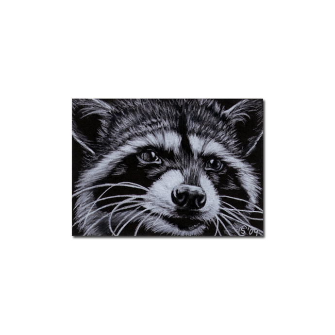 RACCOON 8 woodland critter pencil painting Sandrine Curtiss Art Limited Edition
