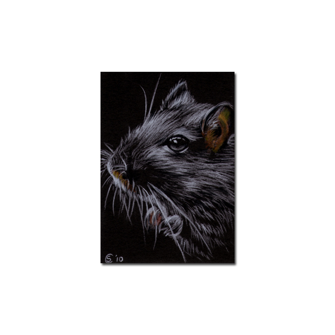 Gerbil portrait rodent rat mouse pencil painting Sandrine Curtiss Art Limited