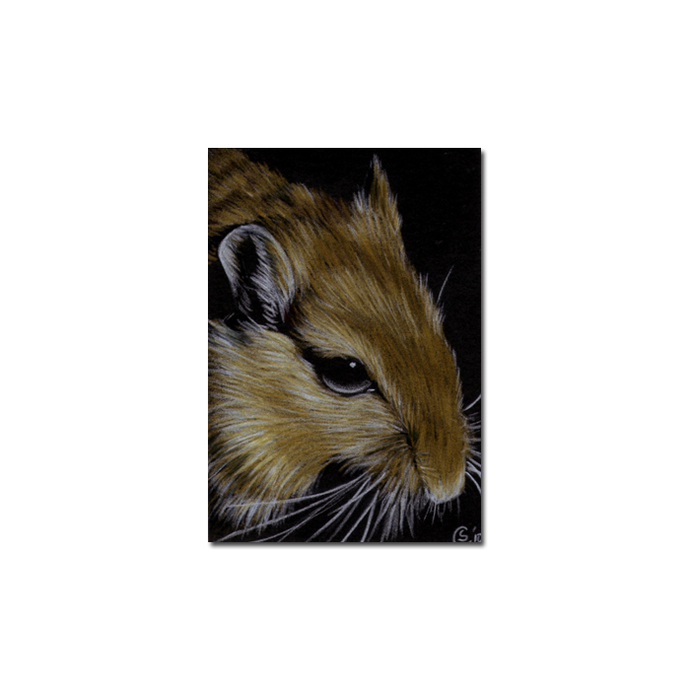 Gerbil 2 portrait rodent rat mouse pencil painting Sandrine Curtiss Art Limited