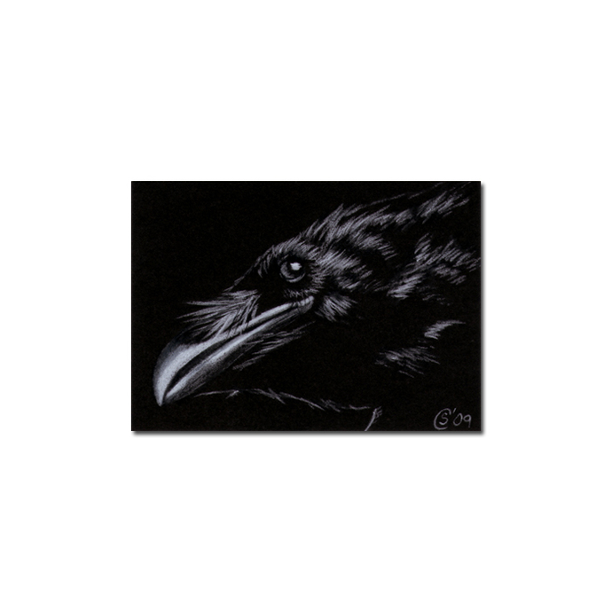 RAVEN 96 crow black bird Halloween colored pencil drawing painting Sandrine