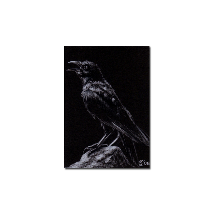RAVEN 47 crow black bird Halloween colored pencil drawing painting Sandrine