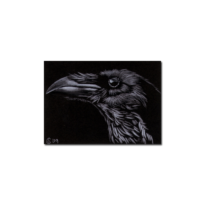 RAVEN 108 crow black bird Halloween colored pencil drawing painting Sandrine