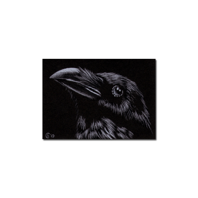 RAVEN 143 crow black bird Halloween colored pencil drawing painting Sandrine
