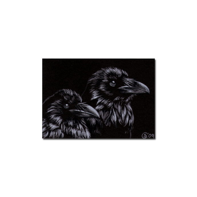 RAVEN 97 crow black bird Halloween colored pencil drawing painting Sandrine