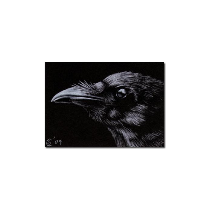 RAVEN 79 crow black bird Halloween colored pencil drawing painting Sandrine