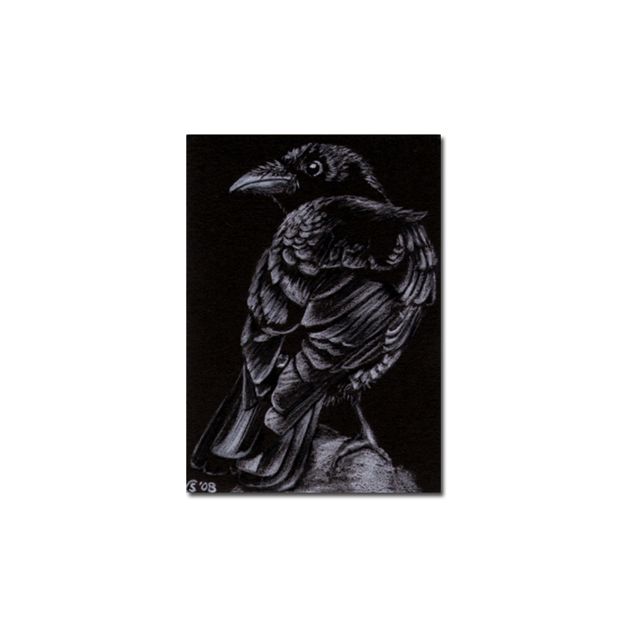 RAVEN 49 crow black bird Halloween colored pencil drawing painting Sandrine