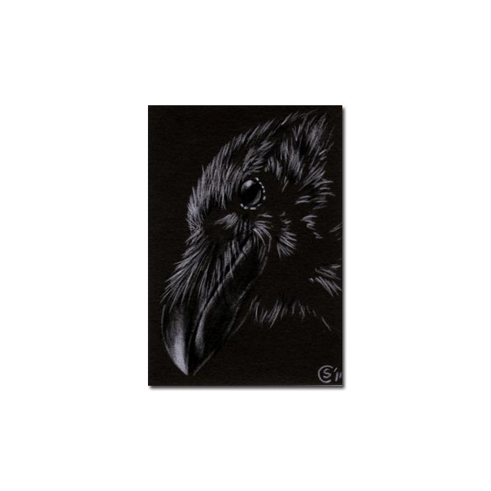 RAVEN 165 crow black bird Halloween colored pencil drawing painting Sandrine