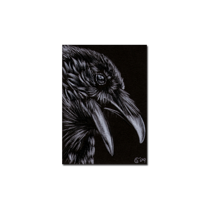 RAVEN 100 crow black bird Halloween colored pencil drawing painting Sandrine