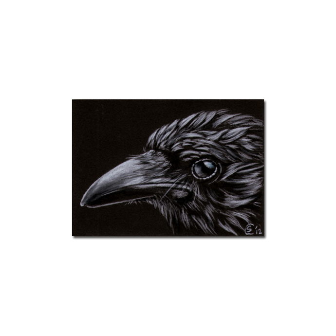RAVEN 184 crow black bird Halloween colored pencil drawing painting Sandrine
