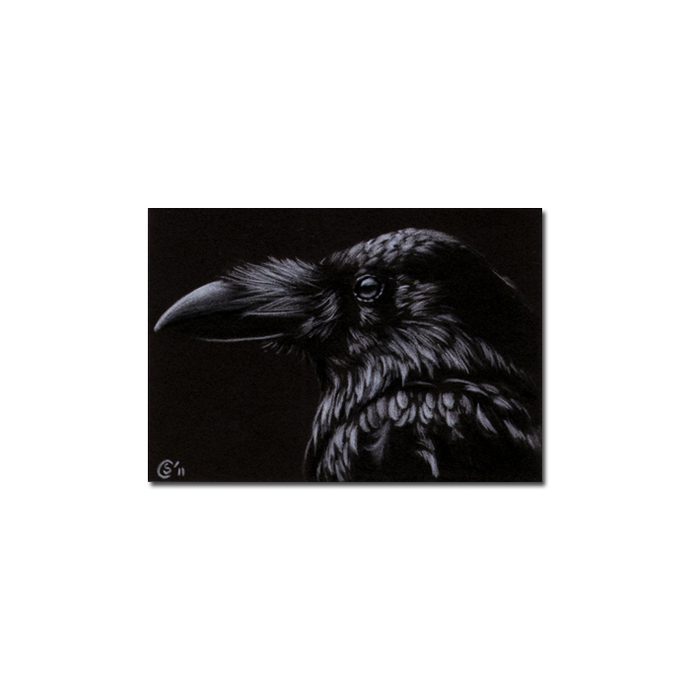 RAVEN 176 crow black bird Halloween colored pencil drawing painting Sandrine