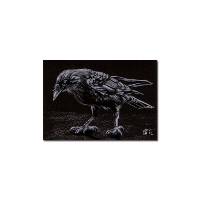 RAVEN 185 crow black bird Halloween colored pencil drawing painting Sandrine