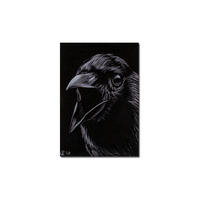 RAVEN 122 crow black bird Halloween colored pencil drawing painting Sandrine