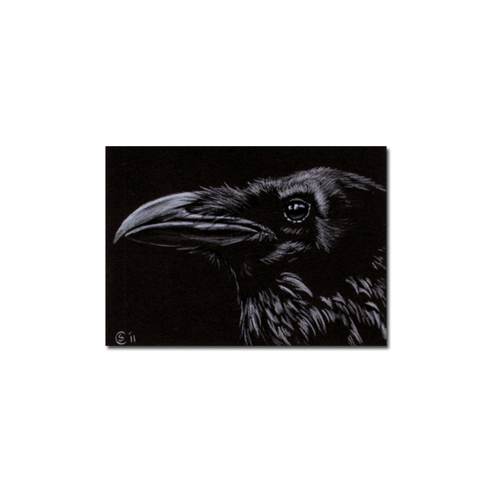 RAVEN 148 crow black bird Halloween colored pencil drawing painting Sandrine