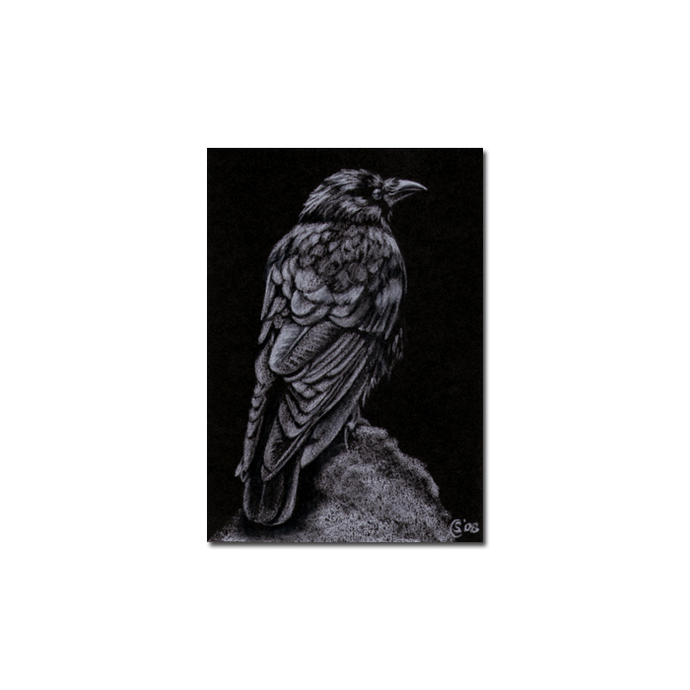 RAVEN 54 crow black bird Halloween colored pencil drawing painting Sandrine