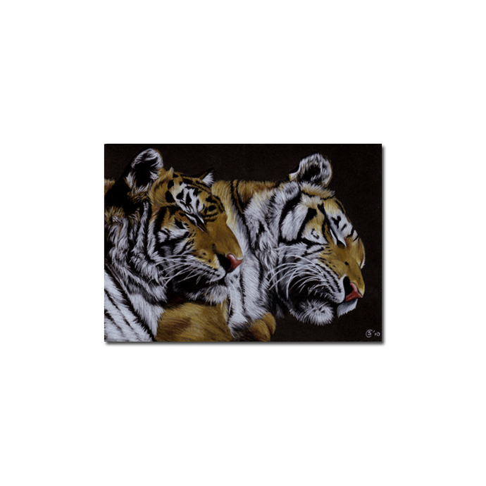 TIGERS portrait big cat feline pencil painting Sandrine Curtiss Art Limited