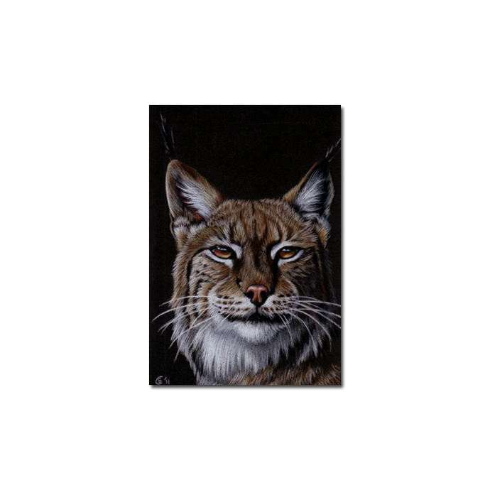 LYNX 2 portrait big cat feline pencil painting Sandrine Curtiss Art Limited