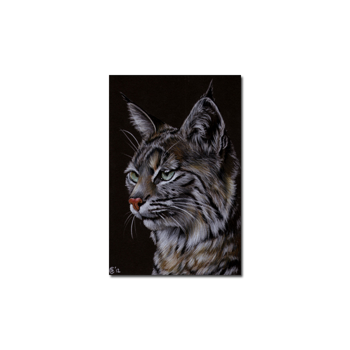 LYNX 3 portrait big cat feline pencil painting Sandrine Curtiss Art Limited
